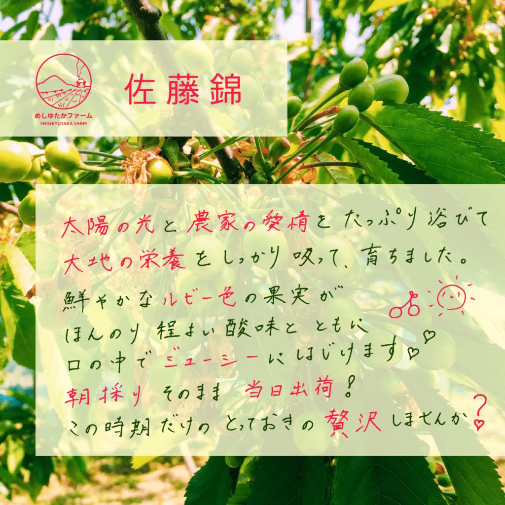佐藤錦02_アートボード 1-min
