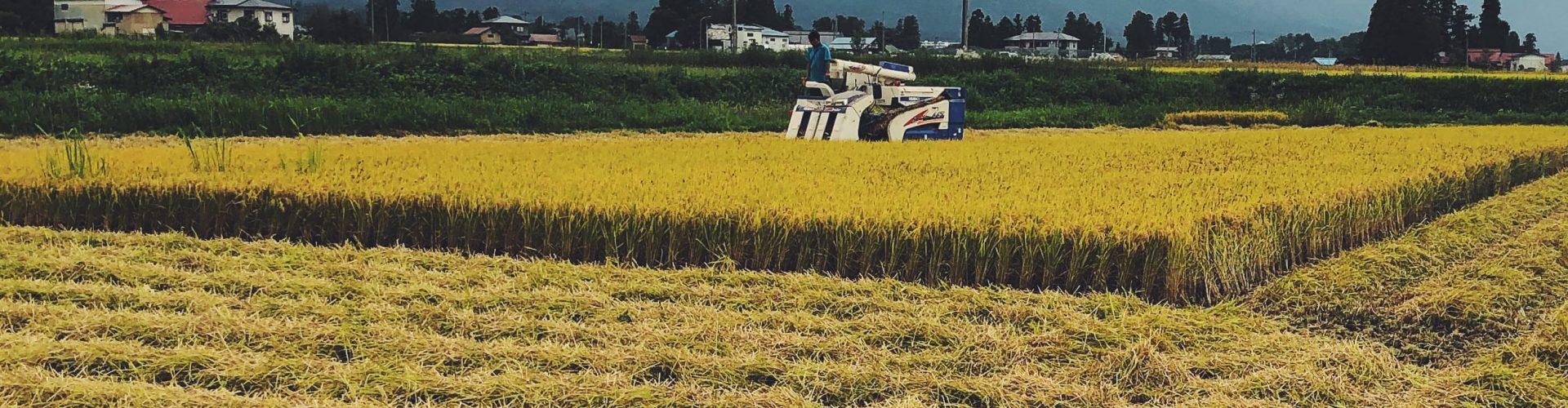 収穫のひとこま